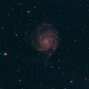 M101 Pinwheel Galaxy,                                Rick Daniell