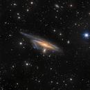 Haley's Coronet - NGC 1531,                                Warren A. Keller