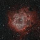 Rosette Nebula HaOIII,                                Adam Jaffe