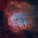 IC410 - The Tadpoles - RASA11 - Bortle 8,                                Andrea Bergamini