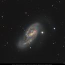 Messier 66 in Leo,                                Michael Feigenbaum