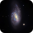 M66, the Largest of the Leo Triplet,                                Ruben Barbosa