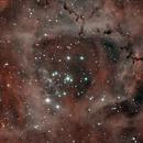 Rosette Nebula,                                Joe Perulero