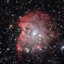 Monkey Head Nebula (NGC 2174),                                WJM Observatory