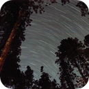 Star Trails through the Ponderosas,                                Ray Heinle