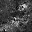 Cygnus Wide Field,                                Taddeuccis
