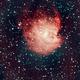 NGC 2174 Monkey Head Nebula,                                Bob Spannagel