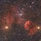 Jellyfish and M35,                                Dennis Sprinkle