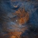 NGC2264 - Cone & Fox Fur Nebulas,                                Mikko Viljamaa