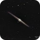 NGC 4565 Needle Galaxy,                                Richard Willits