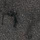 Barnard 143 Dark Nebula,                                Robert Q. Kimball