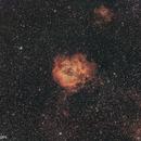 Rosette Nebula #4,                                Molly Wakeling