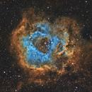 The Rosette Nebula SHO,                                Dan Pelzel