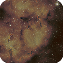 Elephant Trunk Nebula,                                Aaron Freimark