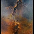 Elephant's Trunk nebula,                                Metsavainio