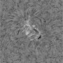 Sun, H-alpha, 31052021. AR2817.,                                BartM