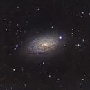 M63 - Sunflower Galaxy,                                Willem
