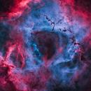 Rosette Nebula Starless,                                William Burns