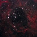Rosette Nebula,                                Scott Fitzpatrick