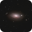 M63 - NGC 5055 - PGC 46153 - UGC 8334 (Sunflower Galaxy) in RGB,                                Uwe Deutermann