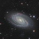 M81 and M82 - First light,                                Matt Proulx
