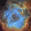 NGC 2244,                                Steve Yan