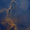 IC 1396A - The Elephant Trunk,                                Timothy Martin & Nic Patridge