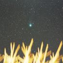 Comet Lovejoy,                                Zach Coldebella