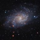 M33 Pinwheel Galaxy,                                Richard Cardoe