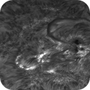 H-alpha Sun,                                Andrea Tamanti