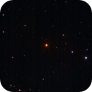 Hind's Crimson Star,                                Anderson Thrasher