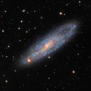 NGC 247, Spiral Galaxy in Cetus,                                José Joaquín Pérez