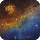 NGC 2327 and the Seagull Nebula IC 2177 - Astronomy Picture of the Day March 12, 2014,                                JOAO A MATTEI