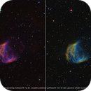 Medusa Nebula Sh2-274,                                Peter Williamson