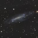 NGC 4236,                                Doug_Bock