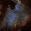 NGC7000,                                Sylwa37