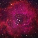 Rosette Nebula,                                Robin Manford