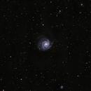 M101 Widefield,                                Shobhit Raj