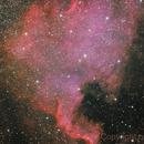 NGC7000 North America Nebula,                                Casey Fox