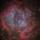 Rosette Nebula,                                Trace