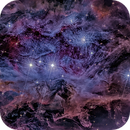 NGC 1977 (NGC 1973, 1975),                                Alex Woronow