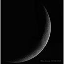 Mondmosaik,                                Michael Kohl