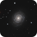 NGC 3147,                                Gary Imm