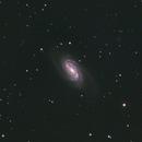 NGC2903,                                Markus A. R. Langlotz