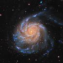M101,                                Michael Lev