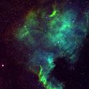NGC7000 - North America Nebula,                                François Marquis