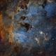 The Cosmic Tadpoles of IC410,                                John Hayes