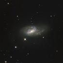 M 66 in Leo,                                Doug_Bock