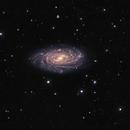 NGC 3893/96,                                Tom Harrison