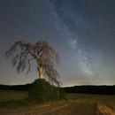 A mid summer night's dream,                                Markus A. R. Lang...